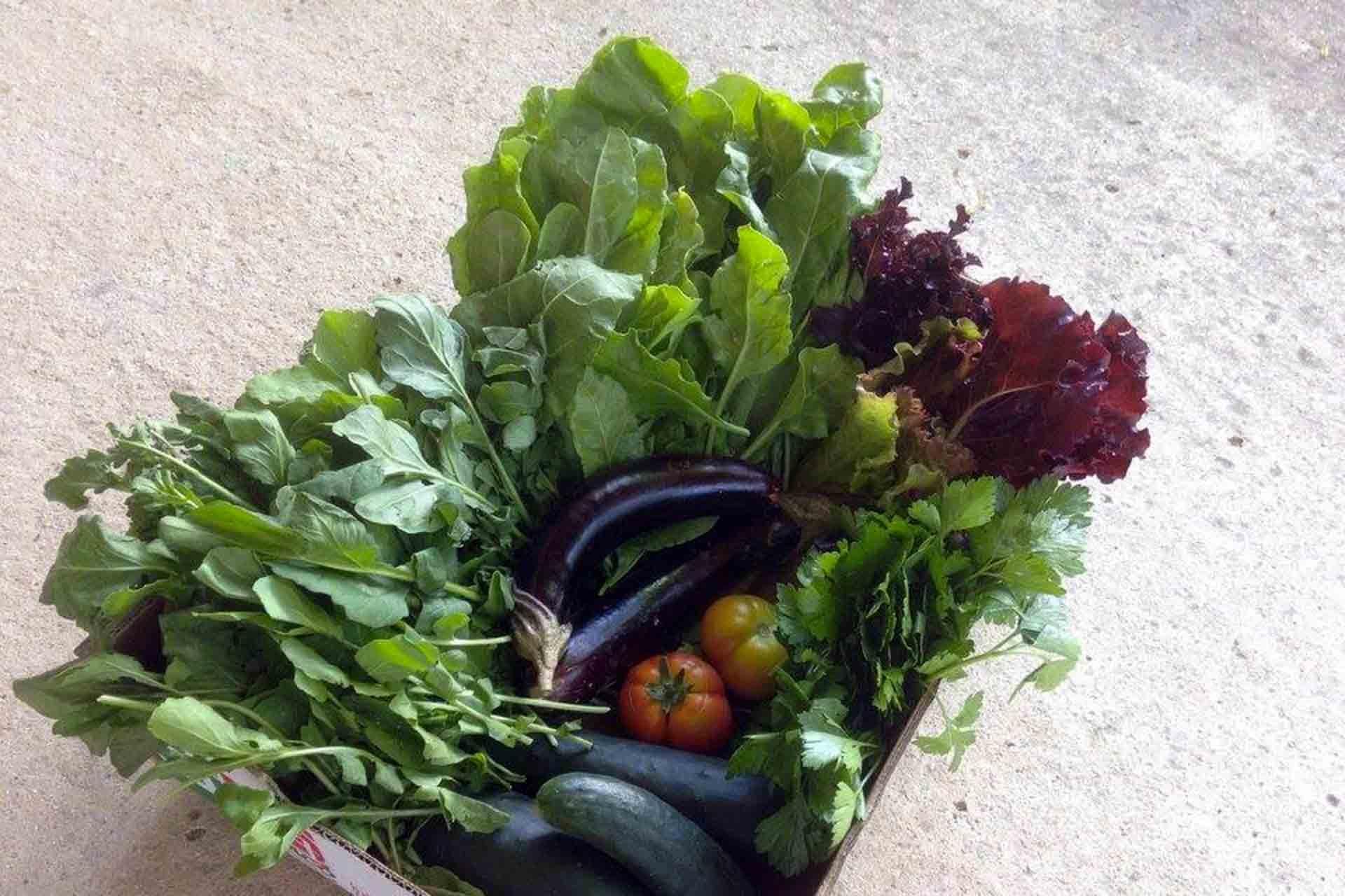 cassetta di verdure dell'orto