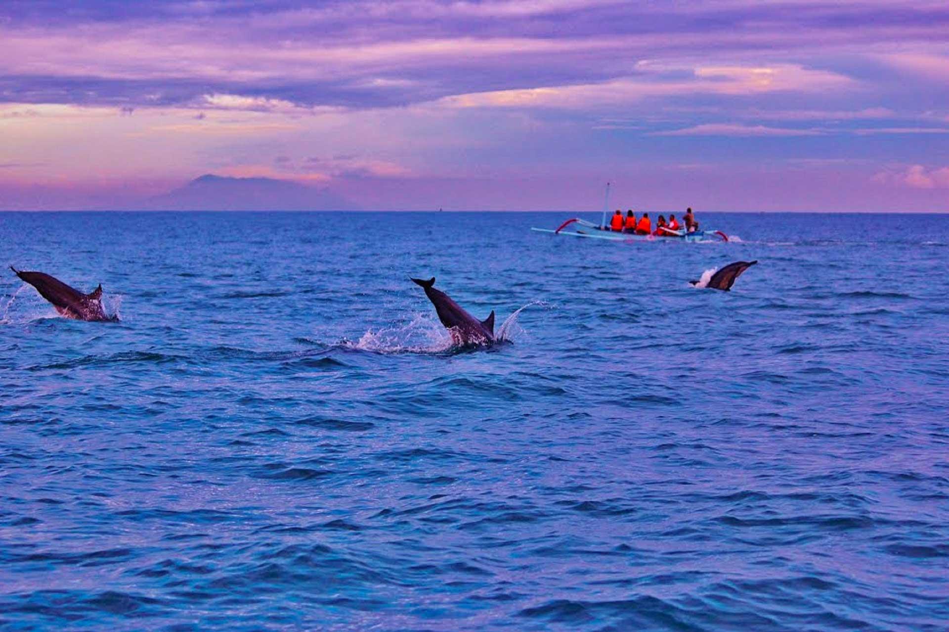 delfini bali lovina