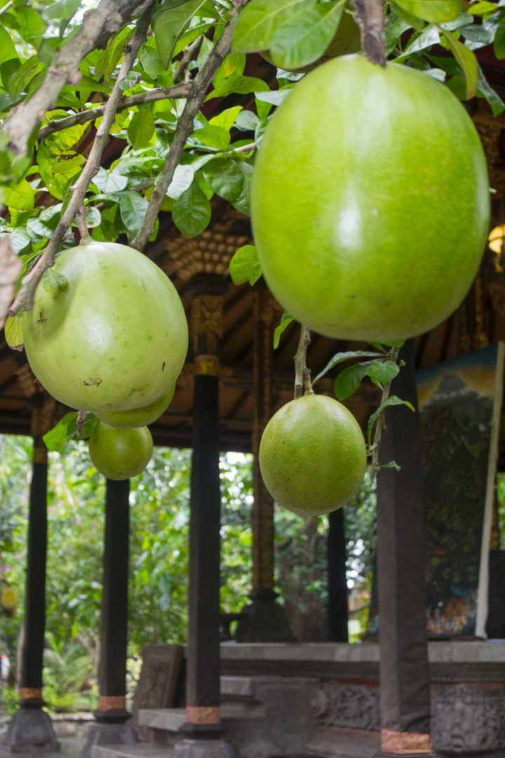 indonesia, bali, frutta