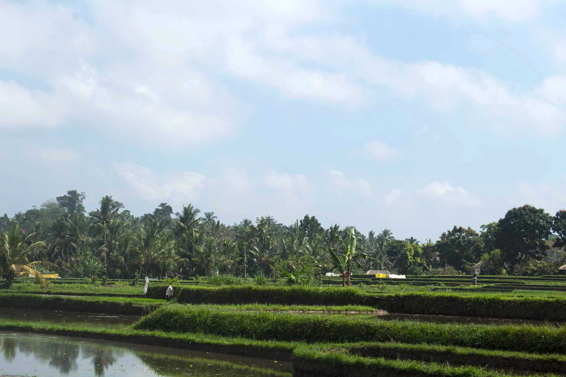 risaia balinese