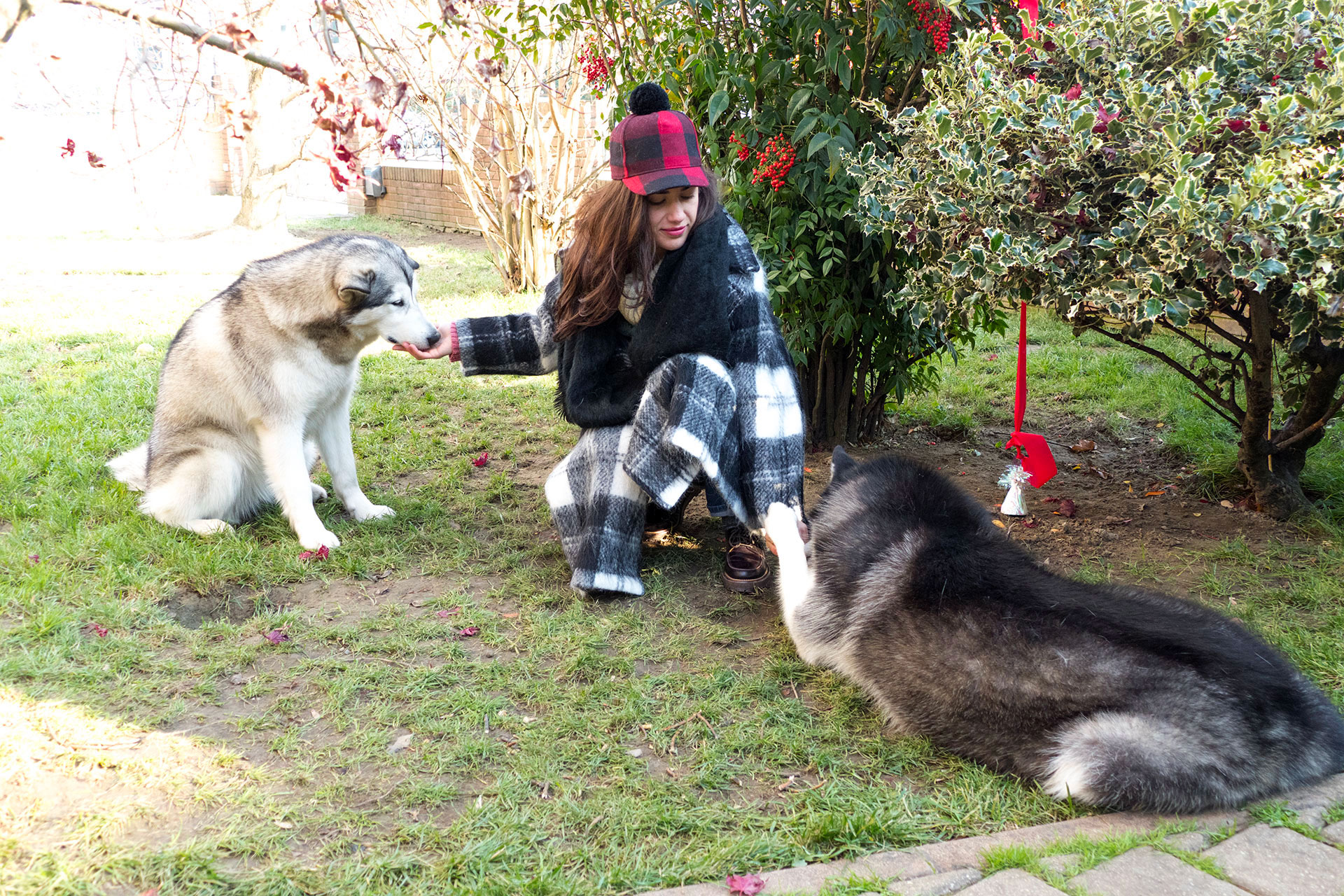 cani con il padrone al parco
