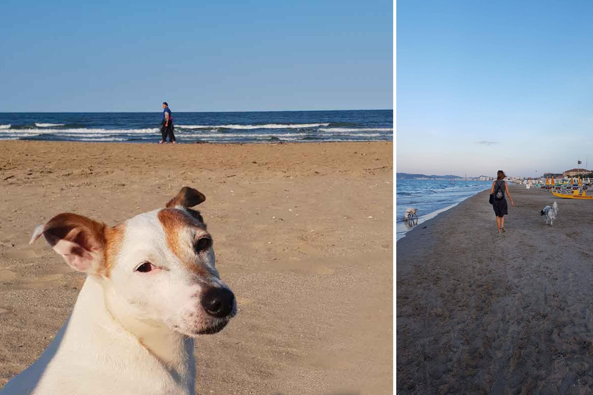 Vacanza Con Il Cane: Ecco La Romagna Per Dog Lovers