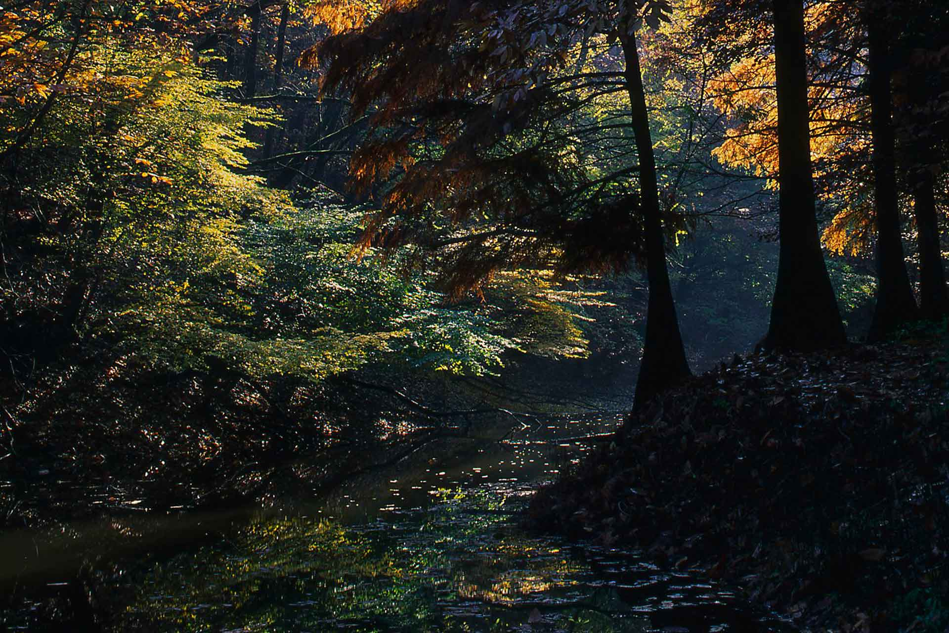 boschi appennino parmense