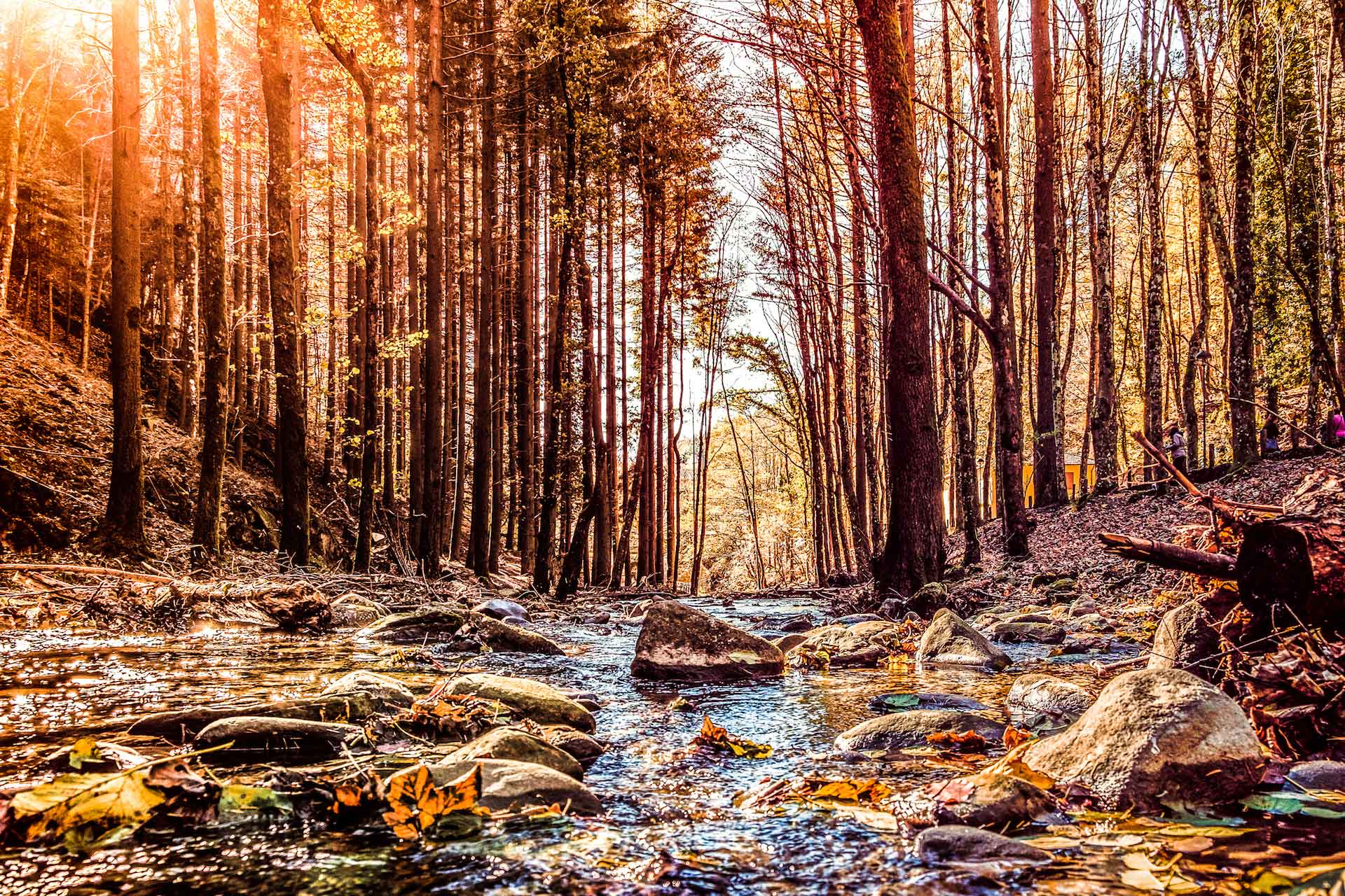 autunno foliage foreste casentinesi